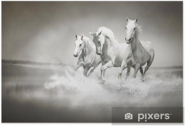 Poster Kudde witte paarden die door water - iStaging
