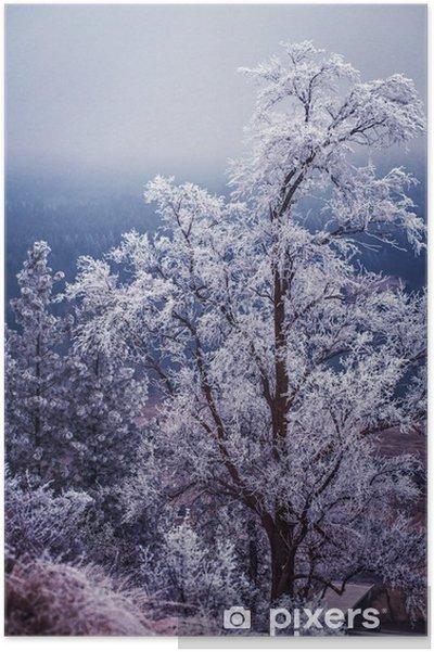 Poster L'hiver et le gel sur les arbres à Spokane - Paysages