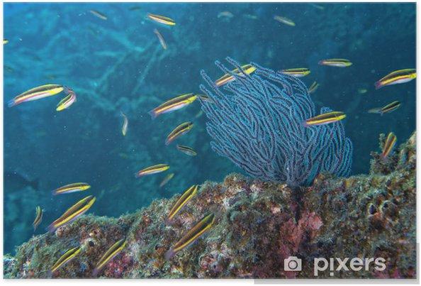 Poster L'intérieur d'un banc de poissons sous l'eau - Animaux marins