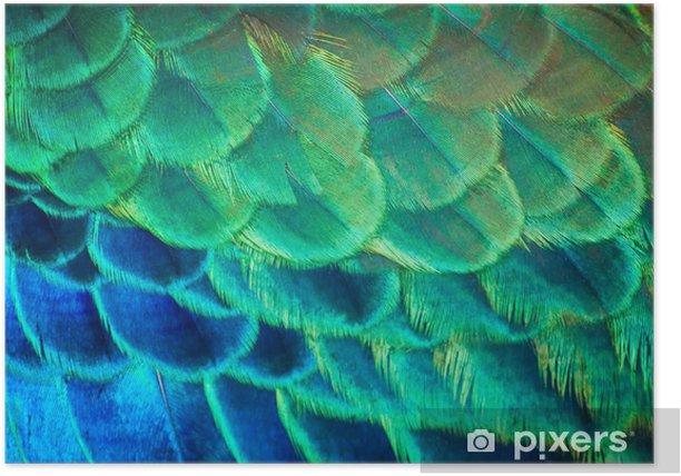 Poster La beauté des couleurs et des dessins de plumes de paon. - Oiseaux