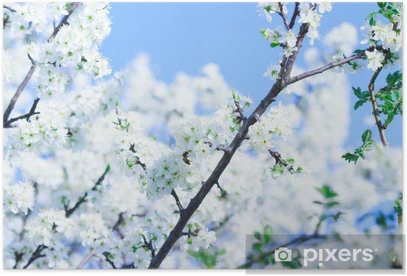 Poster La floraison des arbres avec des fleurs blanches au printemps - Fleurs