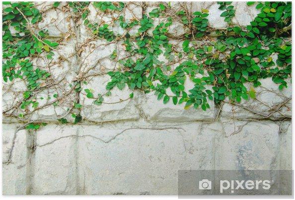 Poster La Plante grimpante Vert - Plantes