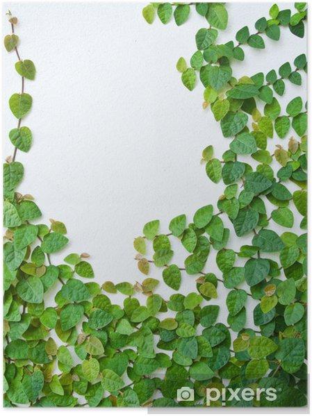 Poster La Plante Verte Plante Grimpante Sur Le Mur De Fond