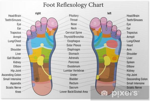 Poster La réflexologie plantaire graphique Description - Beauté et soins du corps