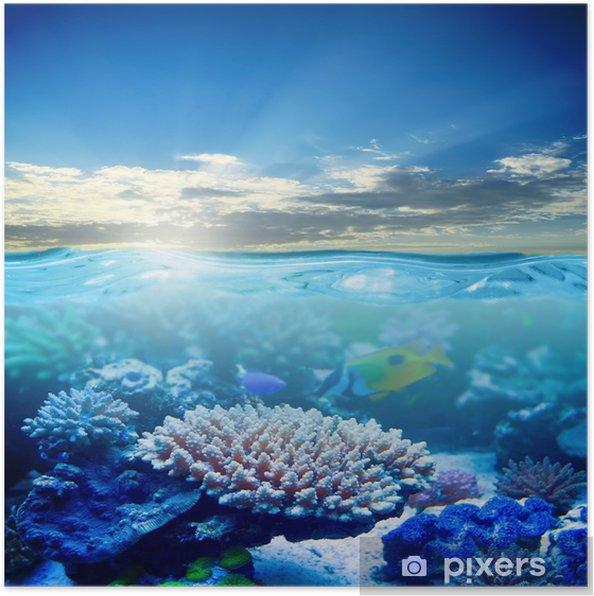 Poster La vie marine - Thèmes