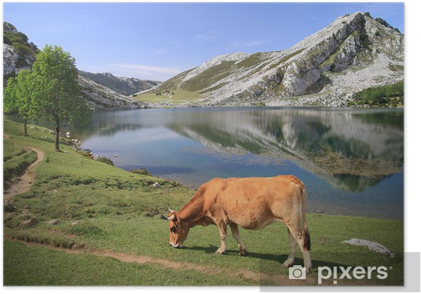 Poster Lac Enol - Covadonga - Picos de Europa - Spanien - Europe