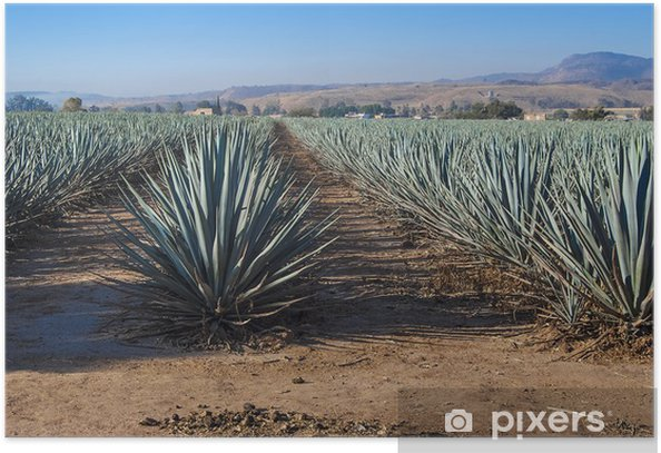 Lanscape tequila guadalajara Poster - Landscapes