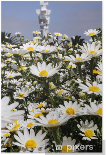Poster Lanzarote en fleur - Saisons