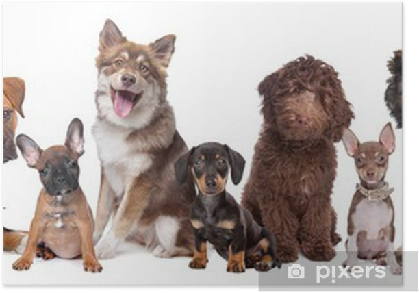 Large Group Of Puppies Poster Pixers We Live To Change