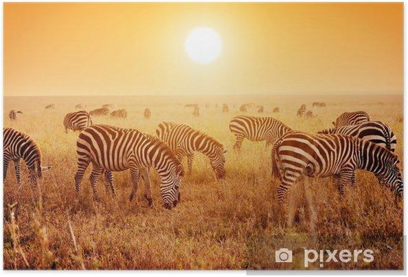 Póster Las cebras ganado en la sabana africana al atardecer. - Temas