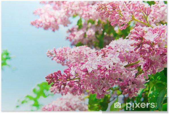 Póster Las flores lila - Plantas