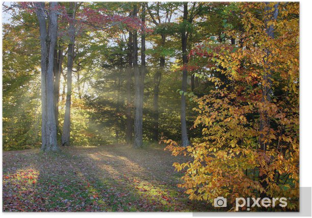 late afternoon autumn Poster - Themes