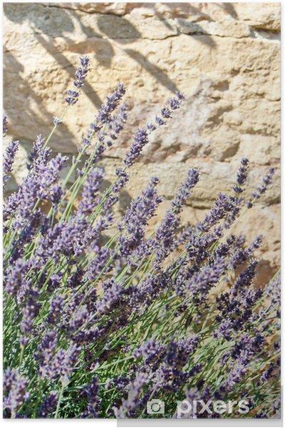 Poster Lavande en été - Agriculture