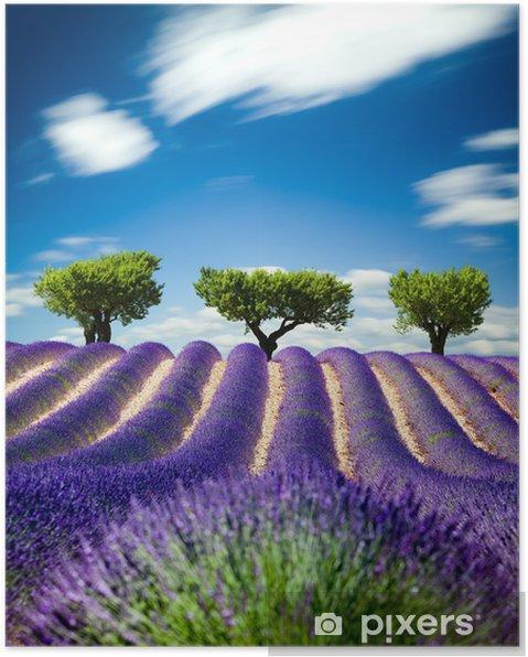 Poster Lavande Provence Frankrike / lavendel fält i Provence, Frankrike -