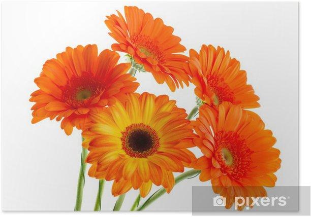 Poster Le bouquet de gerbera opange - Fleurs