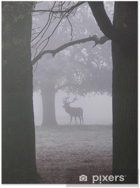 Poster Le cerf de brouillard - Mammifères