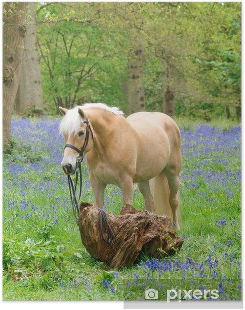 Poster Le cheval à Jacinthes - Mammifères