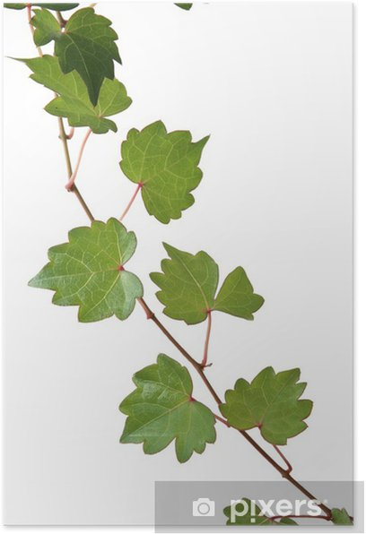 Leaves Poster - Plants