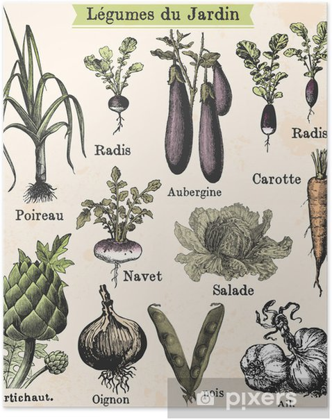 Légumes du jardin Poster - Styles