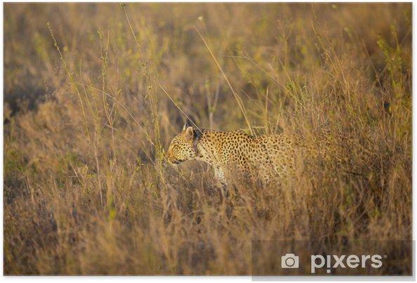 Poster Leopard chasse dans le Serengeti - Afrique
