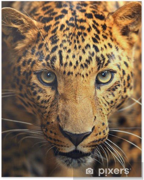 Poster Leopard porträtt - iStaging
