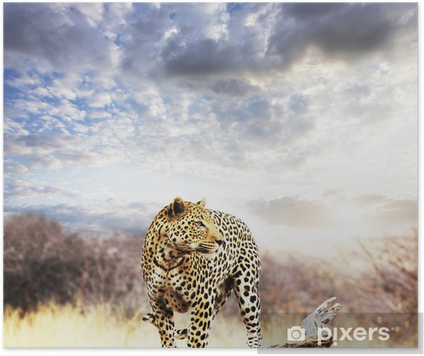 Poster Leopard - Thema's