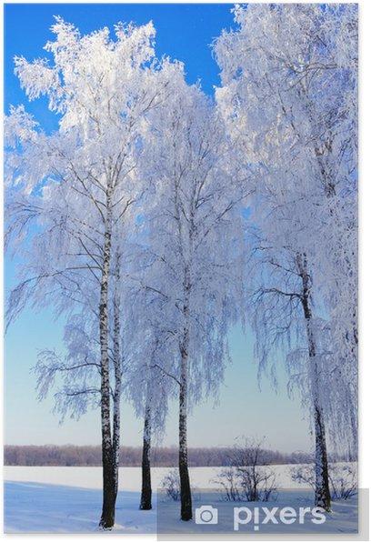 Poster Les arbres de givre matin d'hiver, à l'orée de la forêt. - Saisons