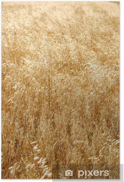 Poster Les champs de céréales - Agriculture