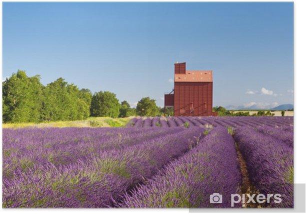 Poster Les champs de lavande en Provence Valensole - Europe