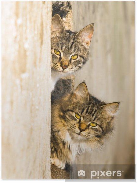 Poster Les chats de printemps - Mammifères