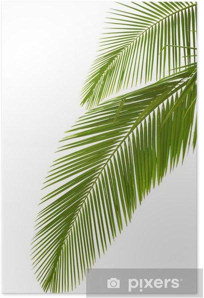 Poster Les feuilles de palmier - Palmiers