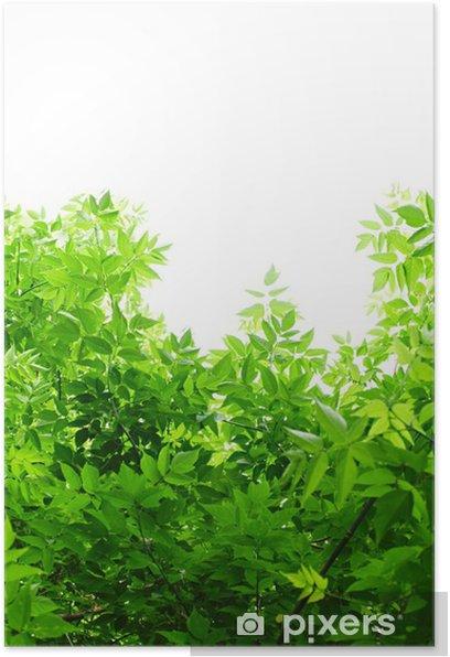 Poster Les feuilles vertes sur fond blanc. - Saisons