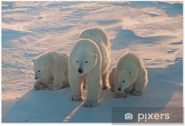 Poster Les ours polaires dans l'Arctique canadien - Thèmes