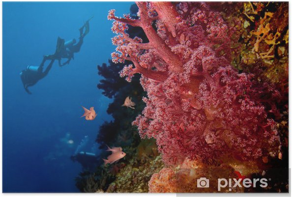 Poster Les plongeurs et les récifs coralliens - Sports aquatiques