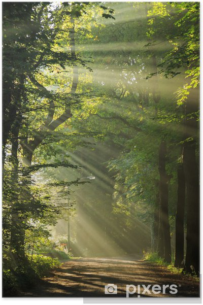 Poster Les rayons du soleil qui brille à travers les arbres dans une forêt. - Thèmes