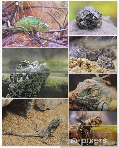 Poster Les reptiles et les amphibiens - Animaux imaginaires