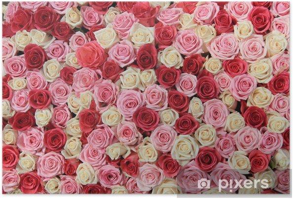 Poster Les roses blanches et roses à l'arrangement - Thèmes