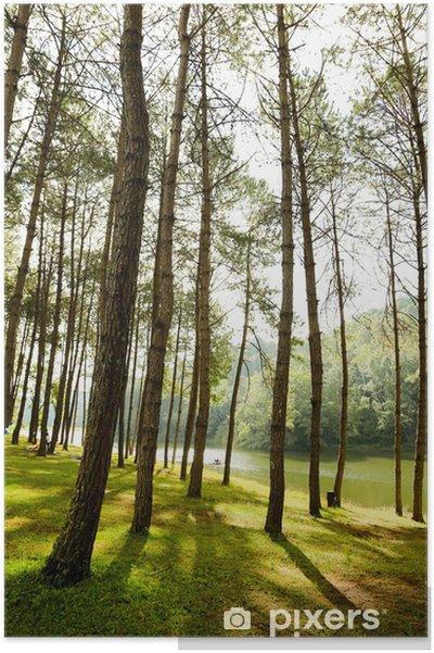 Poster Les saules et la rivière tôt le matin à Cambridge - Eau