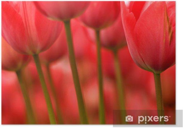 Poster Les tiges et les fleurs - Thèmes