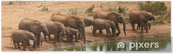 Poster Les vaches et les veaux éléphant à la mare. - Afrique