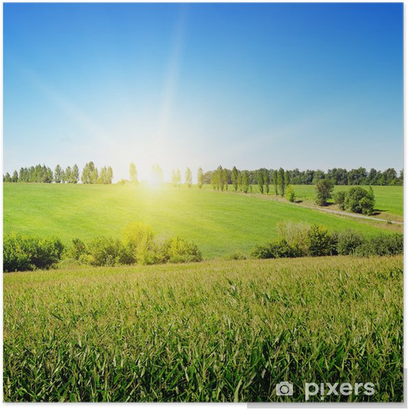 Poster Lever de soleil sur le champ de maïs - Thèmes