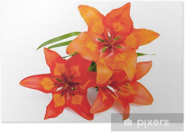 Poster Lilium martagon - Fleurs