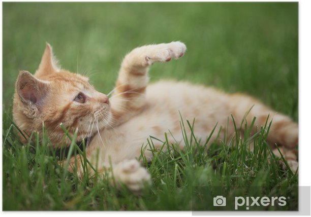 Little cat playing in grass. Selective focus, shallow DOF. Poster - Mammals
