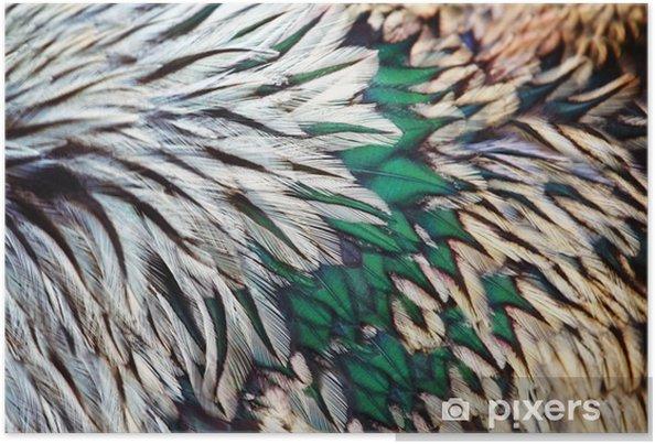 Poster Ljus brun fjäder grupp vissa fågel - Grafiska resurser