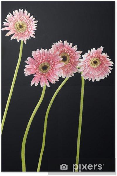 Poster Longue tige rose gerbera - Fleurs