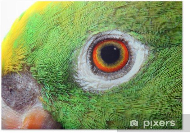 Póster Loro del Amazonas - Temas