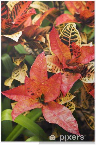 Poster Lumineux plante tropicale. - Arbres