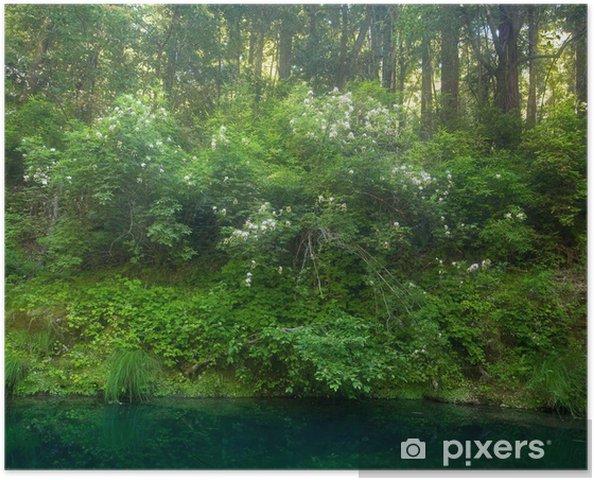 Poster Lush forêt idyllique au printemps - Forêt