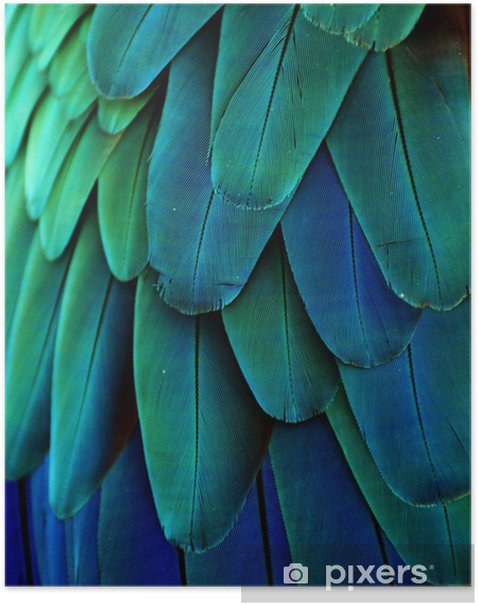 Macaw Feathers (Blue/Green) Poster - iStaging