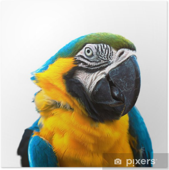 Poster Macaw - Sticker mural